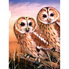"""Tawny Owls - Junior Small Paint By Number Kit 8.75""""X11.75"""""""