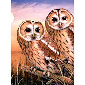 "Tawny Owls - Junior Small Paint By Number Kit 8.75""X11.75"""
