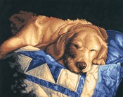 """Afternoon Nap - Paint By Number Kit 14""""X11"""""""