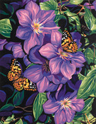 """Clematis & Butterflies - Paint By Number Kit 11""""X14"""""""
