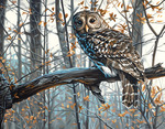 """Wise Owl - Paint By Number Kit 14""""X11"""""""