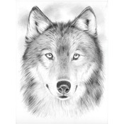 """Wolf - Sketching By Number Kit 8""""X12"""""""