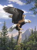 """Screaming Eagle - Paint By Number Artist's Collection 9""""X12"""""""