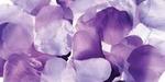 Purple - Rose Petals 300/Pkg
