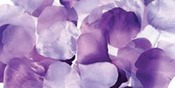 Purple - Rose Petals 300/Pkg