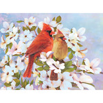 "Cardinals - Color Pencil By Number Kit 8.75""X11.75"""