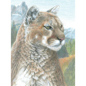"Cougar - Color Pencil By Number Kit 8.75""X11.75"""