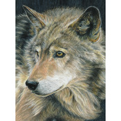 """Curious Eyes - Color Pencil By Number Kit 8.75""""X11.75"""""""