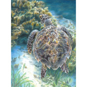 "Sea Turtle - Color Pencil By Number Kit 8.75""X11.75"""