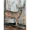 """Whitetail Buck - Color Pencil By Number Kit 8.75""""X11.75"""""""