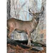 "Whitetail Buck - Color Pencil By Number Kit 8.75""X11.75"""