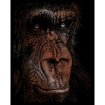 "The Wise Simian - Copper Foil Engraving Art Kit 8""X10"""