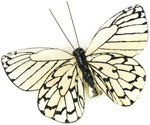 "Black/Cream - Butterfly On Clip 2.75"" 1/Pkg"