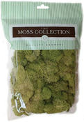 Spring Green - Preserved Reindeer Moss 108.5 Cubic Inches