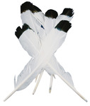 White With Black Tip - Simulated Eagle Feathers 4/Pkg