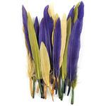 """Nouveau Mardi Gras Mix - Mini Indian Feathers 3"""" 24/Pkg"""
