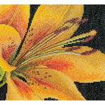 "6""X5.5"" 18 Count - Lily On Aida Counted Cross Stitch Kit"