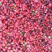 Prills 3oz - Berry Nice
