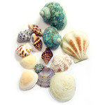 Gathered Sea Shells -