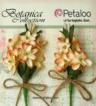 Cream Velvet Lilacs - Petaloo