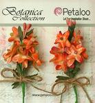 Apricot Velvet Lilacs - Petaloo