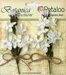 White Velvet Lilacs - Petaloo