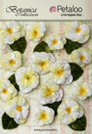 White Velvet Pansies - Petaloo