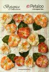 Apricot Velvet Pansies - Petaloo