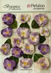 Purple Velvet Pansies - Petaloo
