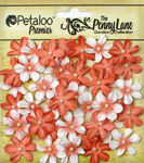 Antique Peach Mini Daisy Petites - Penny Lane - Petaloo
