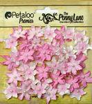 Soft Pink Mini Daisy Petites - Penny Lane - Petaloo