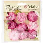 "Fuchsia - Botanica Baby Blooms 1.25"" 9/Pkg"