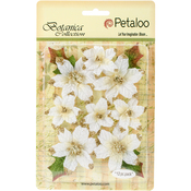 White - Botanica Regal Gold Poinsettia 12/Pkg