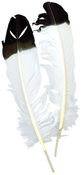 White W/Black Tip - Imitation Eagle Quill Feathers 2/Pkg
