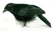 "Standing Crow - Mushroom Bird 4"""