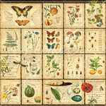 Diary Of A Botanist Paper - Nature Sketchbook - Graphic 45