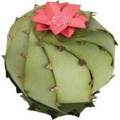 Barrel Cactus 3D - Sizzix Thinlits 3D Dies By Lynda Kanase 2/Pkg