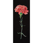 "6.5""X16.5"" 18 Count - Carnation Red On Aida Counted Cross Stitch Kit"