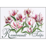 "23.25""X16.75"" 16 Count - Rembrandt Tulips On Aida Counted Cross Stitch Kit"