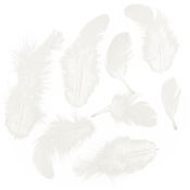 White - Rooster Plumage Feathers .04oz