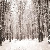 Snowcapped Paper - Christmas Edition - KaiserCraft