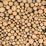 Logs Paper - Mint Wishes - KaiserCraft - PRE ORDER