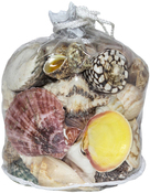 "6.5""X7""  - Designer Shell Gift Bag Large"