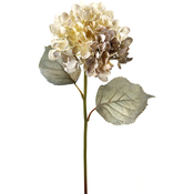 Weathered White - Weathered Princess Hydrangea 25""