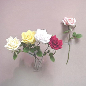 Cream/White - Royal Rose Pick 11.5""