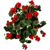 Red - Hanging Geranium