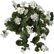 White - Hanging Geranium