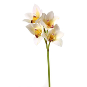 White - Cymbidium Spray X4 20""