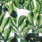 Lush Paper - Havana Nights - KaiserCraft