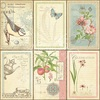 Botanical Tea Deluxe Collectors Edition - Graphic 45 - PRE ORDER